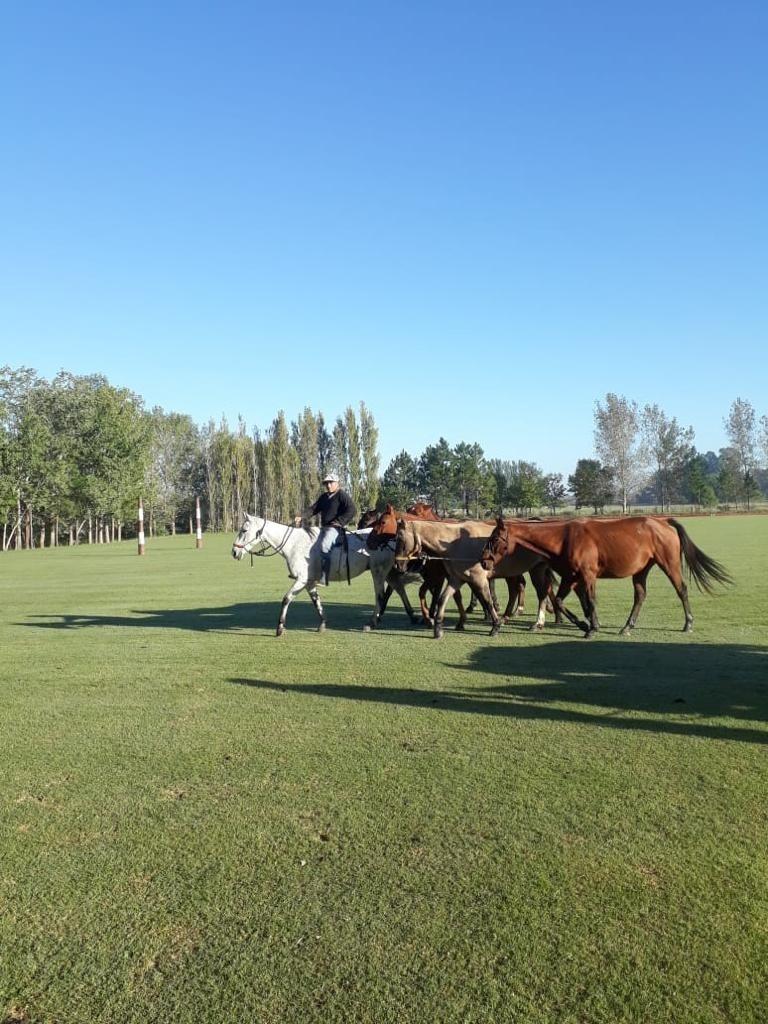 horses with gaucho in estancia